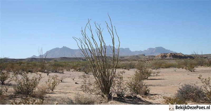 9. Chihuahua-Wüste