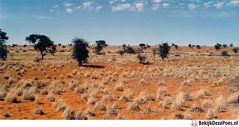 4. Kalahari