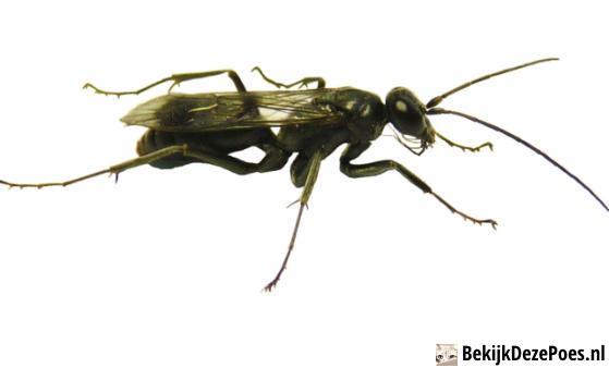 6. Mutterliebe einer Wespe