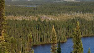 Top 10 Überraschende Fakten Über Die Wälder Der Erde