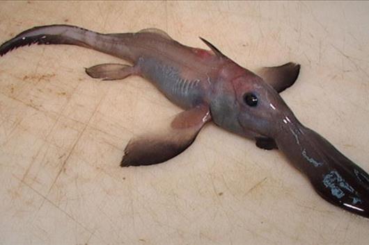 Top 10 Der Schrecklichsten Kreaturen Der Tiefe