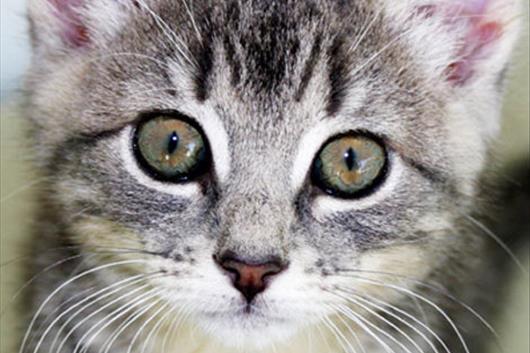 Top 10 Beliebtesten Katzennamen